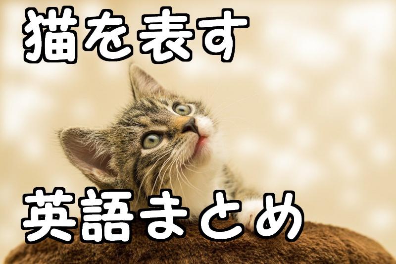 catとkittyとpussyの違いを解説!猫を意味する英語の使い方