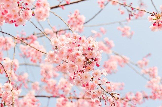 bloomとblossom違い